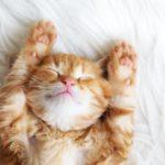 【改善まとめ】少ない睡眠で体を回復させる便利グッズ・アイテム
